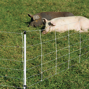 Electric Pig Fence 30m long