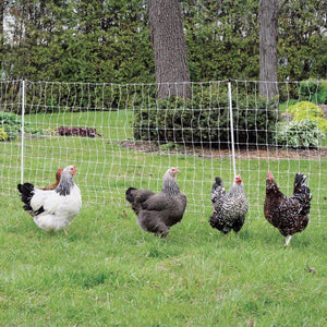 Electric Poultry Fence