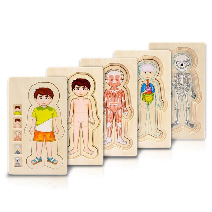 Girl & Boy Body Structure Wooden Multi-layer 3D Puzzle