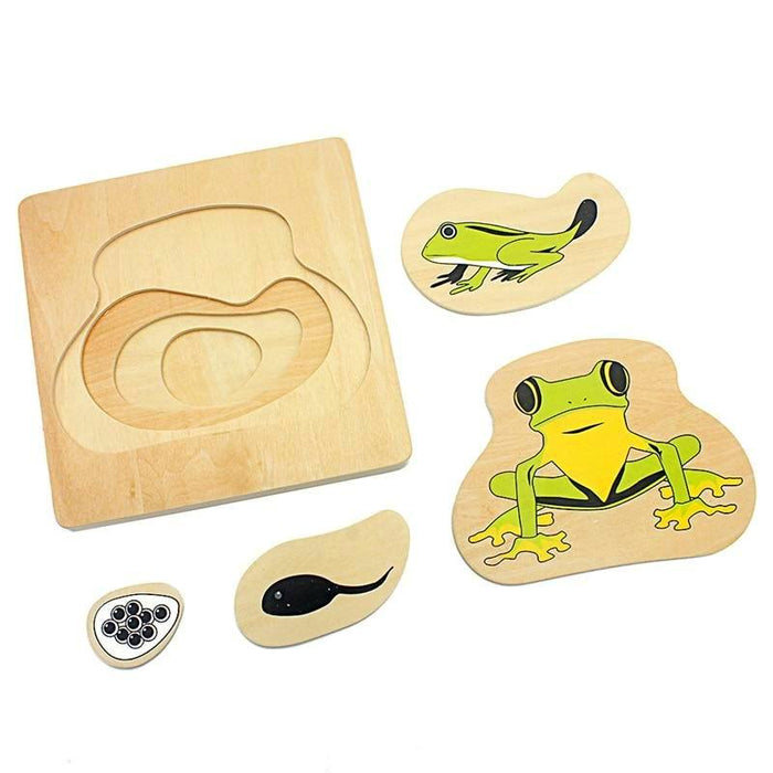 Life Cycle of the Frog 3D Puzzle