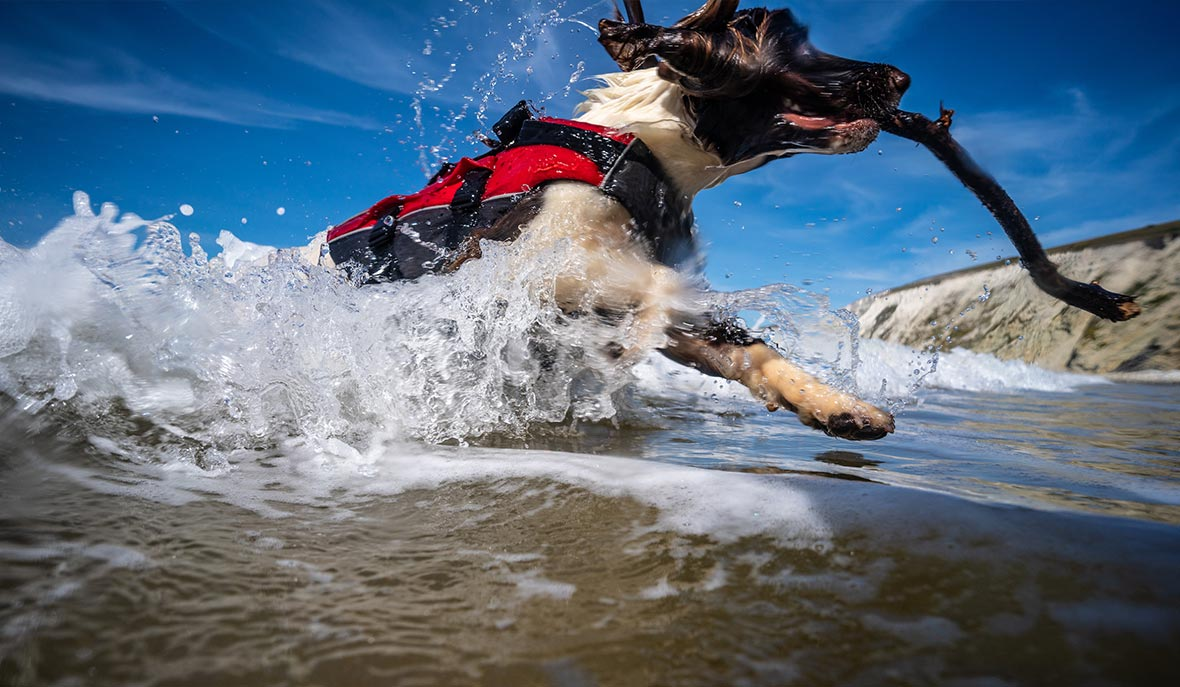 Dog running in the water wearing Red Original Dog Buoyancy Aid