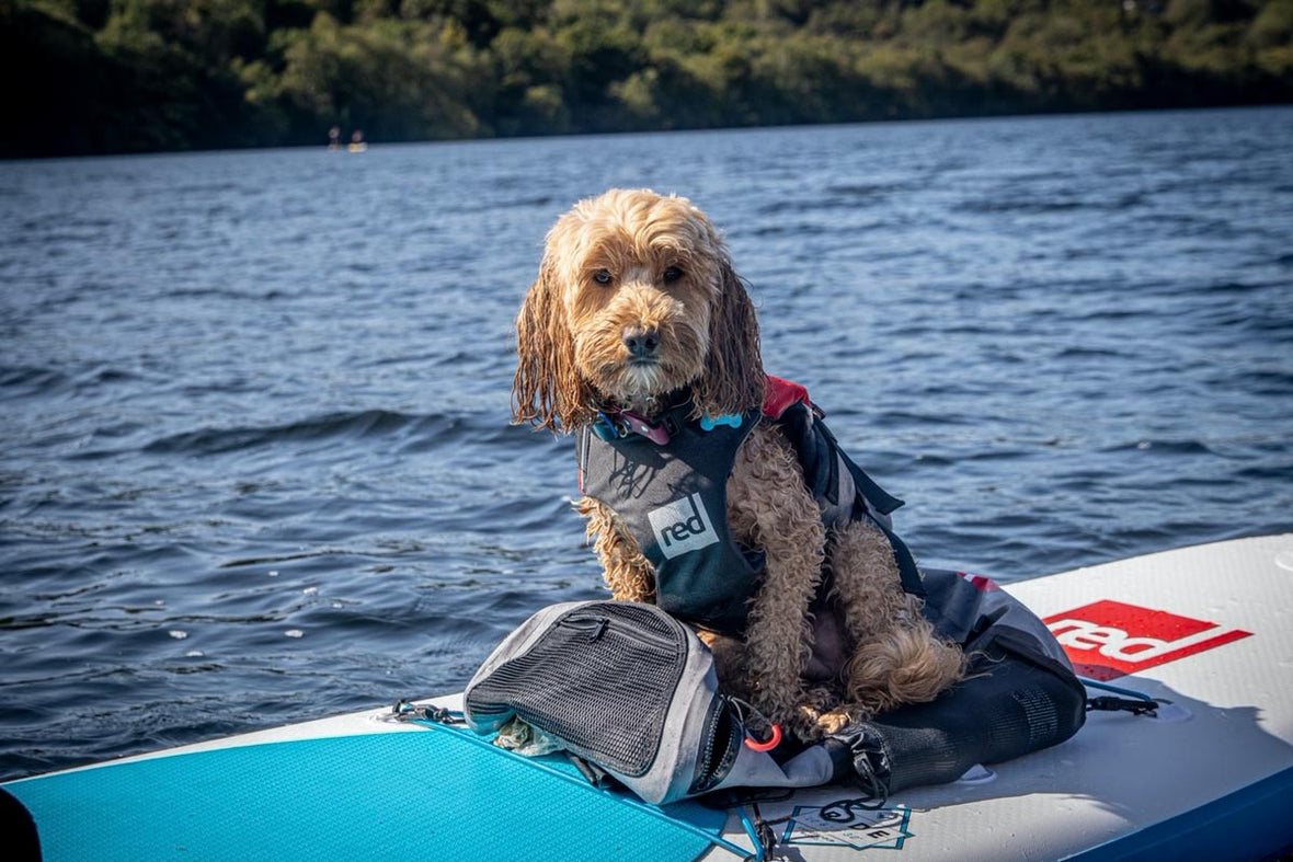 Reggie The Cockapoo On A Red Paddle Board Wearing A Red Original Dog Buoyancy Aid