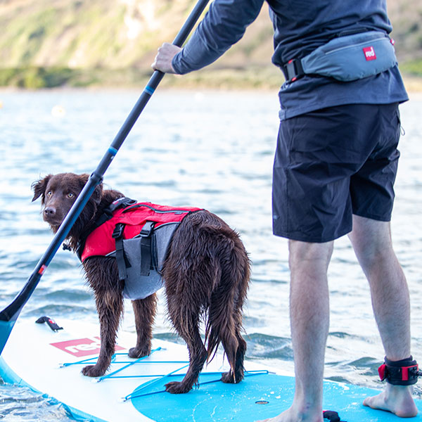 A Dog Wearing The Dog Buoyancy Aid on a paddle board
