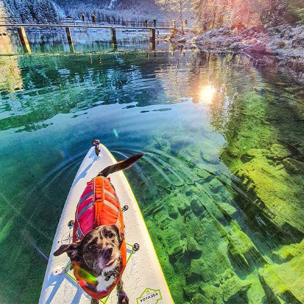 A Dog On A Paddleboard