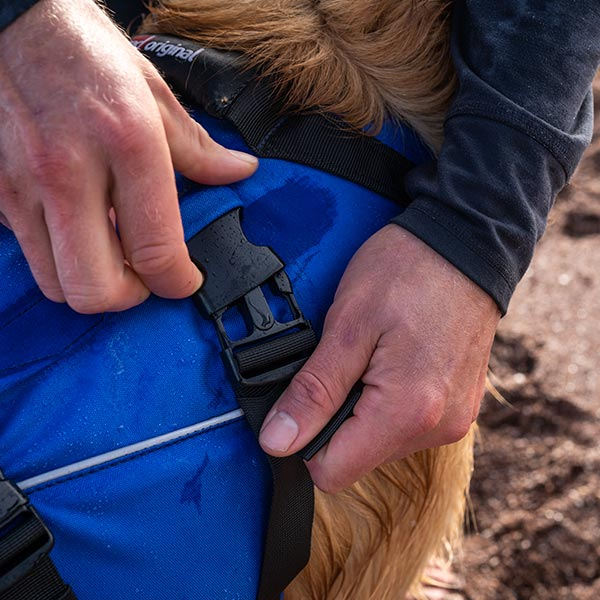 Blue coloured Dog Buoyancy Aid being clipped onto a dog