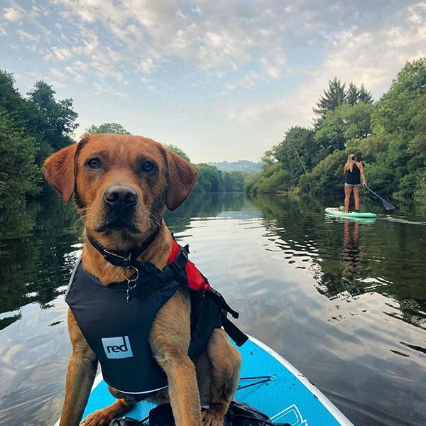 A Dog On a Paddle Board