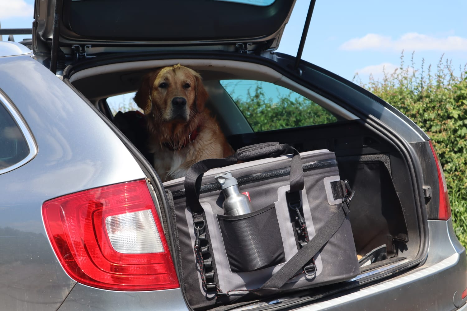 Cooler Bag In A Car With A Dog