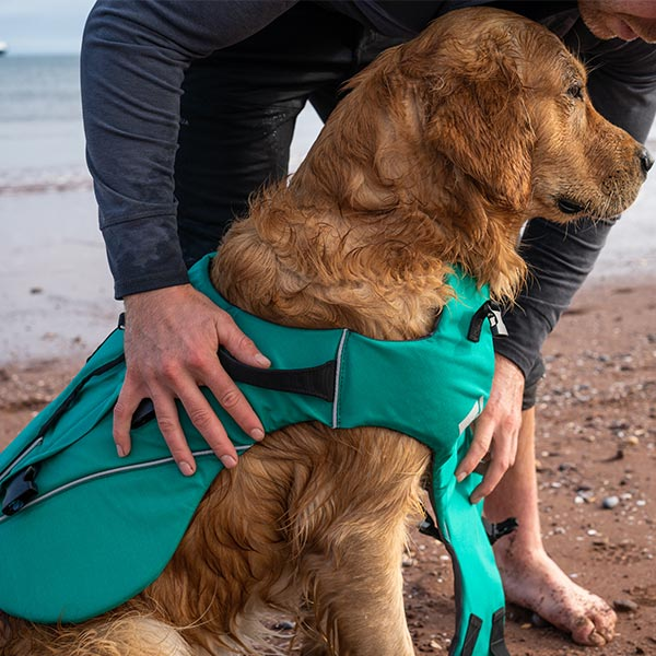 wet dog wearing green Dog Buoyancy Aid while sat on a beach