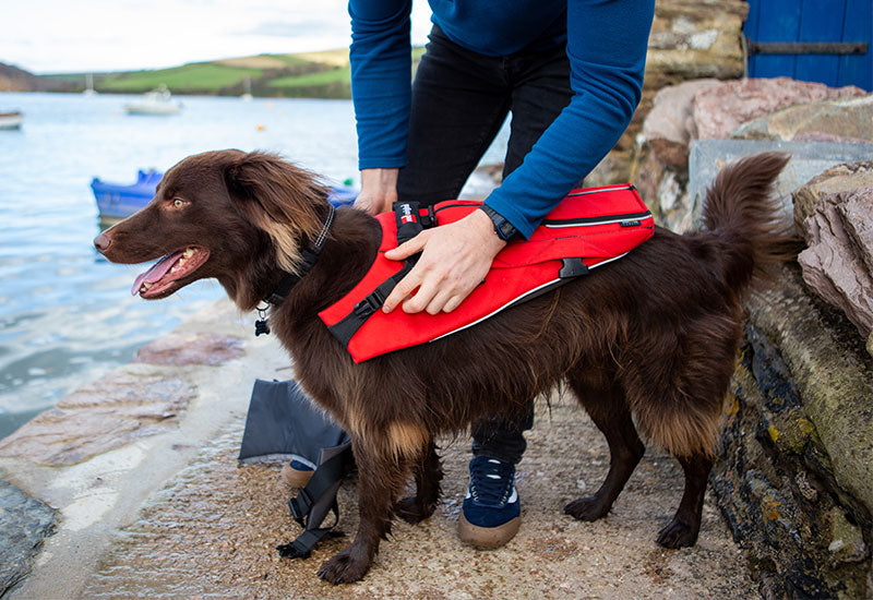 Putting on the Red Original Dog Buoyancy Aid