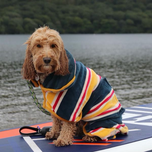 A dog on a paddle board in a yellow, black, and white Drying Robe