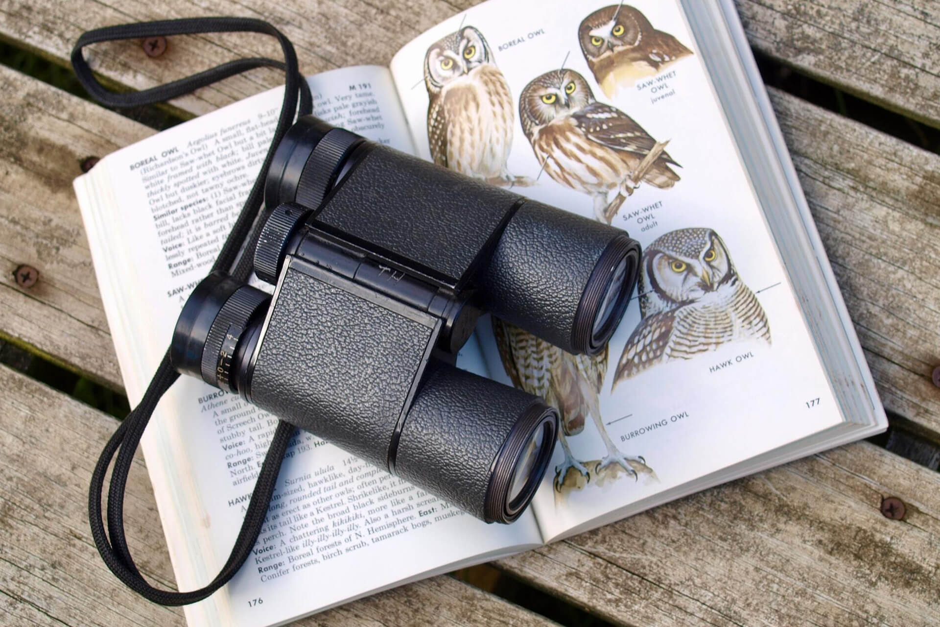 Binoculars and a birdwatching book open to a page with owls on a wooden slat surface