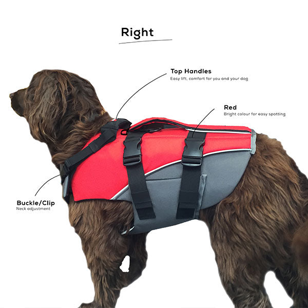 Dog Buoyancy Aid From The Right
