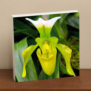 Lady Slipper Orchid II