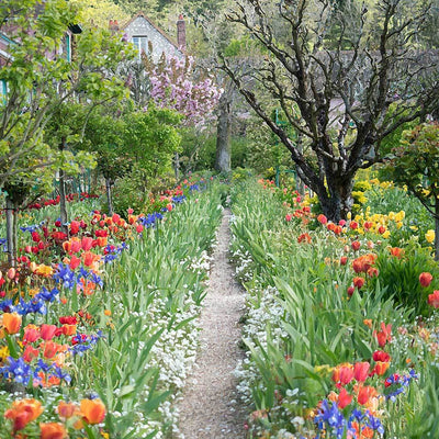 Path leading down the center of a colorful spring garden of tulips and Iris flowers.