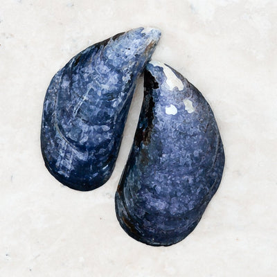 Blue Mussel Shells