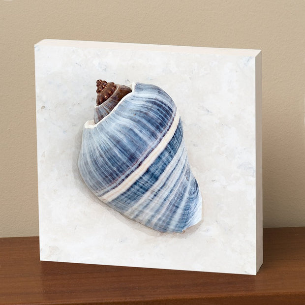 Striped Blue Spiral Shell