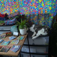 Bean the Boss (gray and white cat) sitting a top a drawer unit of blank stock, overseeing photos of all of my business card designs through the years in the tie dye studio's stock & shipping room
