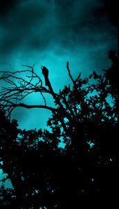 The Guardian Of Night Tree