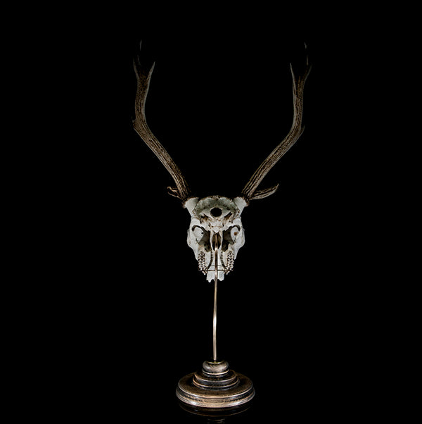 Ethically sourced deer skull mounted on base taxidermy Decorus Macabre - Decorus Macabre