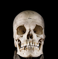 Genuine antique human skull from a real human skeleton Human Bone Decorus Macabre - Decorus Macabre