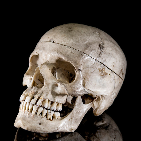 Genuine antique human skull from a real human skeleton