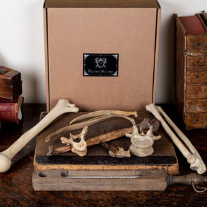 Mystery box : The Beginner oddities Decorus Macabre - Decorus Macabre