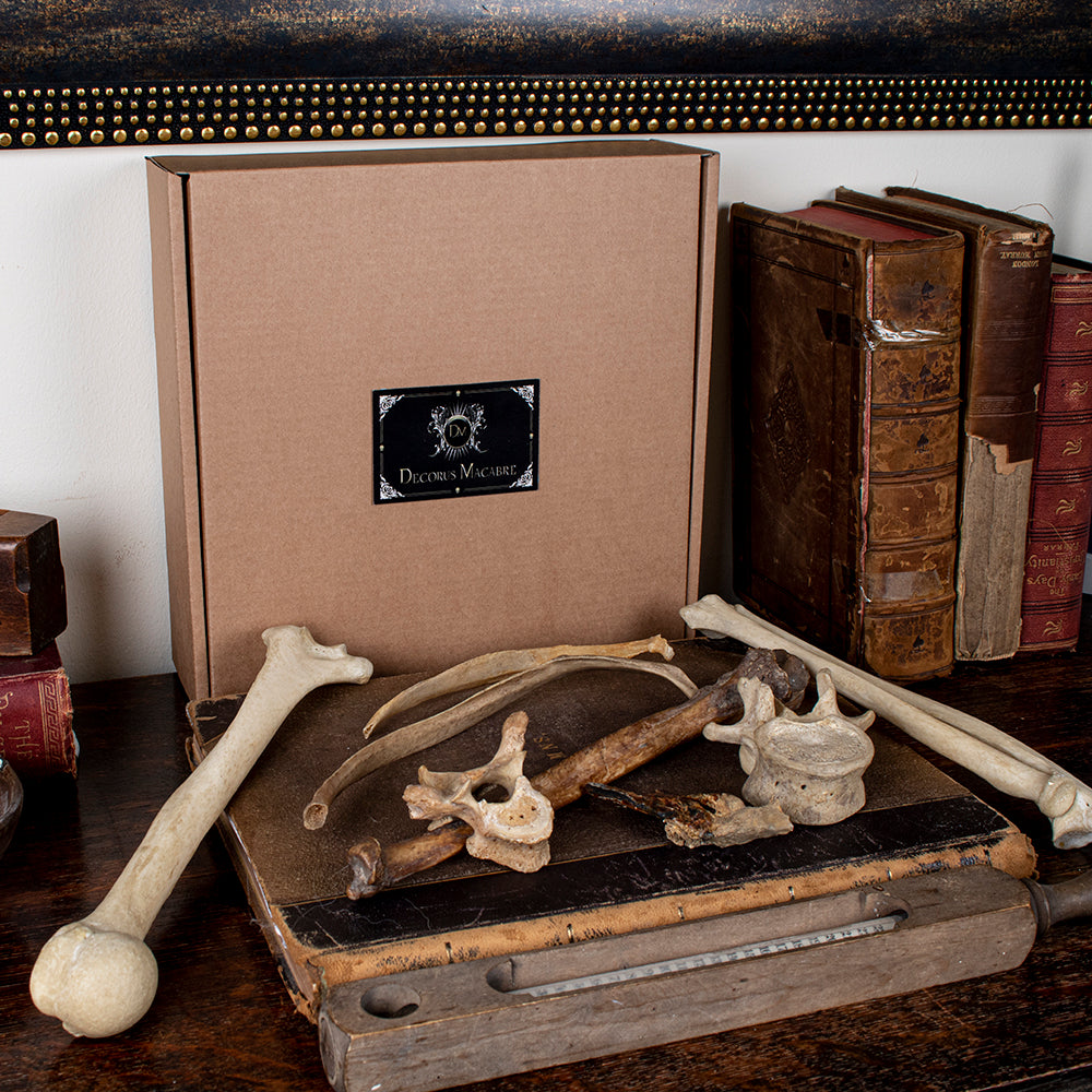 Mystery Box -The Master oddities Decorus Macabre - Decorus Macabre