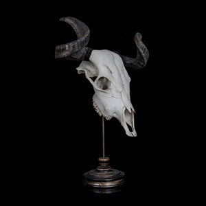 Cow skull with ram horns - Hybrid taxidermy Decorus Macabre - Decorus Macabre