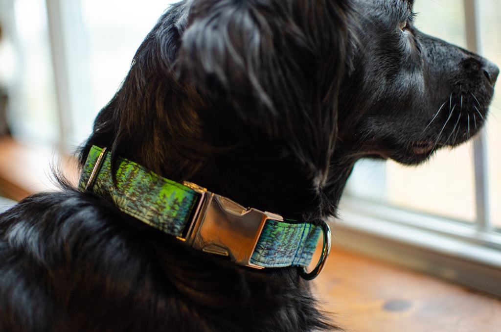 Retriever / Spaniel Mix Dog Wearing Sustainable Waxed Canvas Hemp Collar in Porter Pattern