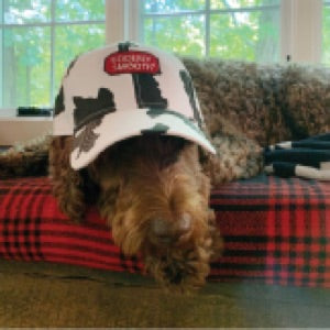 a photo of a dog wearing and Udderly Smooth branded baseball cap