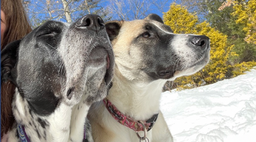 How does a dog's sense of smell compare to yours?