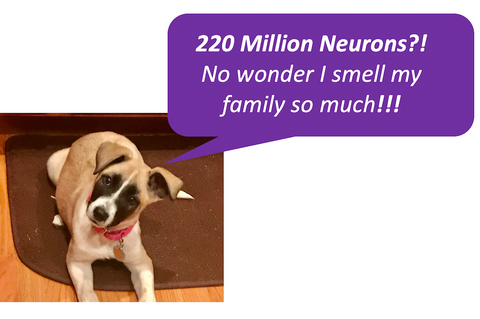 220 million neurons in a dog lets them smell their family a whole lot