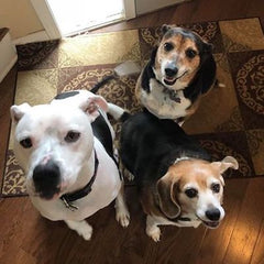 Heyden, Sophie and Maisey LOVE our peanut butter treats!