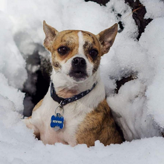 Meet Newton!  he's a Good Paws fan as well - and apparently LOVES snow!
