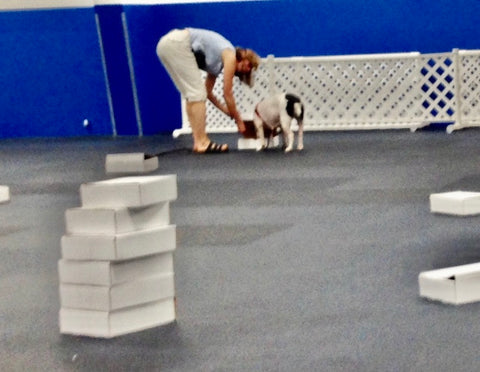 In Nosework, dogs find hidden smell targets