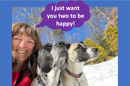 just want happy dogs - how a dog's sense of smell works