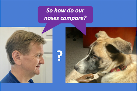 how does a dogs sense of smell compare to a human