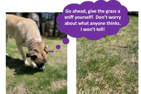 give the grass a sniff yourself to see what it smells like