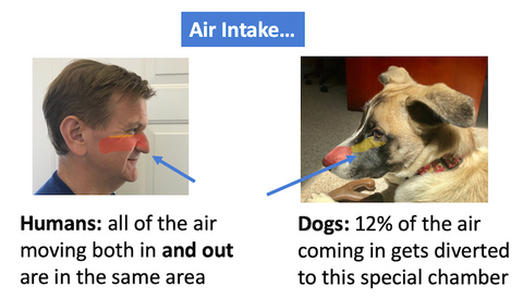 how air comes into a human's and dog's nose area
