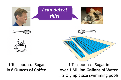 sugar detection in liquid differences between a dog and a human