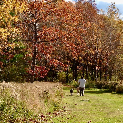 Walking in nature helps our dogs and our brains