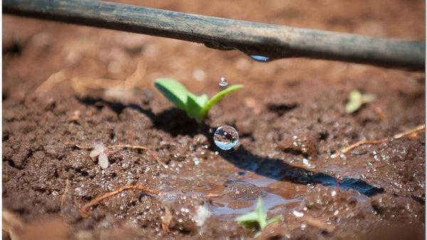 How to use drip irrigation with landscaping.