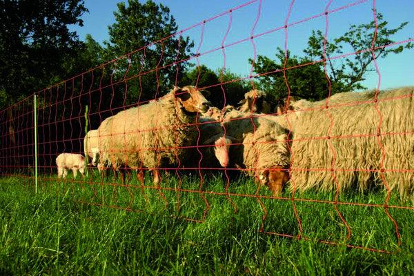 Electric fencing for sheep and goats.