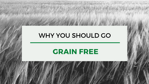 Why you should go grain free