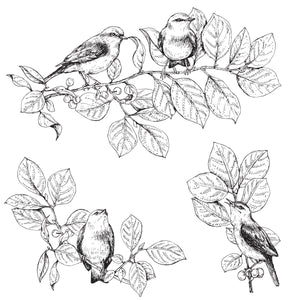 Coloring Book: Birds on Branches