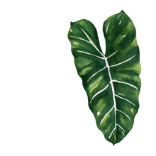 Watercoloring Book: Tropical Leaves