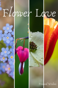 Flower Love: Our Woodland Gardens, Spring Edition
