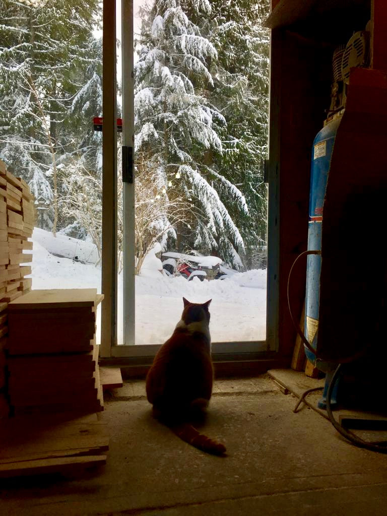 Fat orange cat with cabin fever looking out at the snowy Canadian landscape