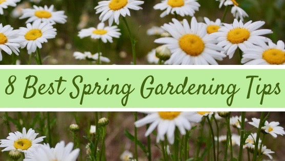 8 best spring gardening tips from Pressed Wishes