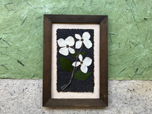 BC Provincial Flower - Dogwood Flower. Pressed Wishes has create a one of a kind, real pressed dogwood framed picture to enjoy in your home. SHIPS WORLDWIDE